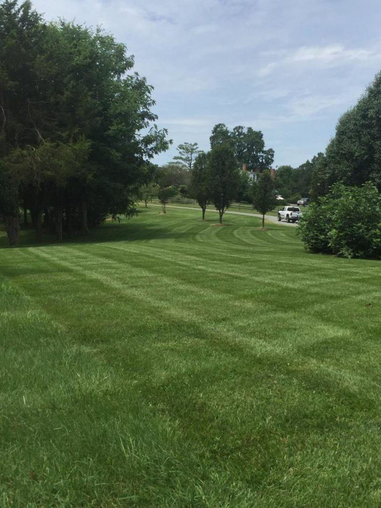 Freshly mowed lawn in lake anna, virginia. Criss-cut patterns can be seen leading to freshly pruned trees and a sharpe edge cut next to the road.