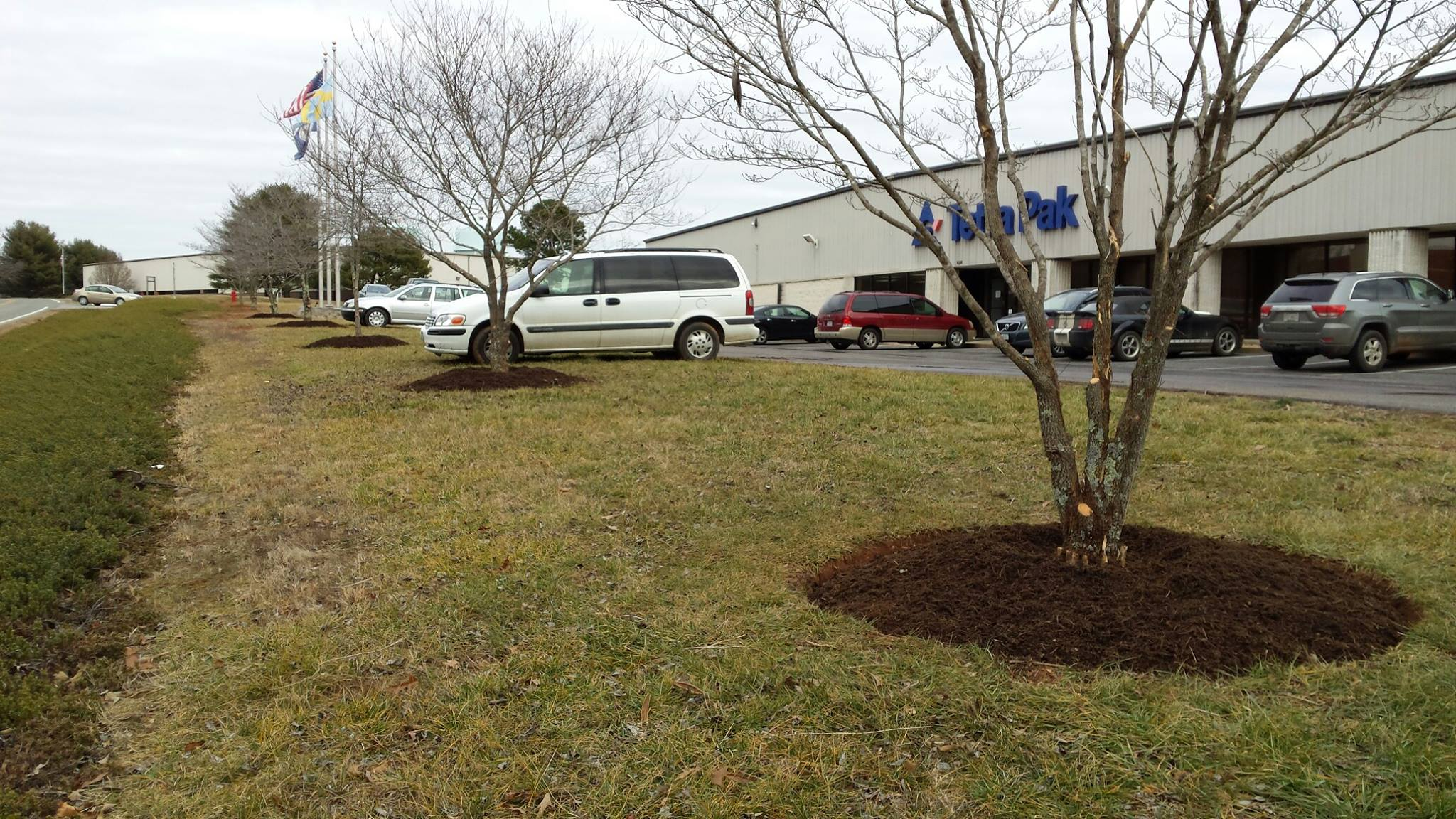 freshly planted trees in front of a strip mall