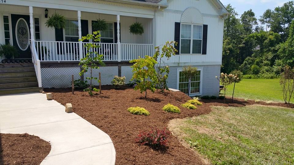 tree bark laid out around newly planted bushes and trees around a white two story house and a newly poured concrete walkway leading up to the front door
